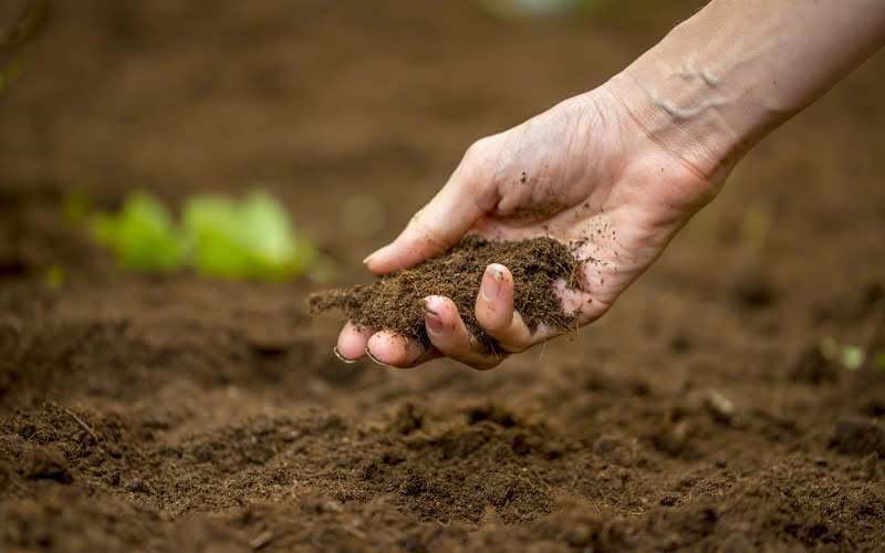 đất màu trồng cây giá rẻ